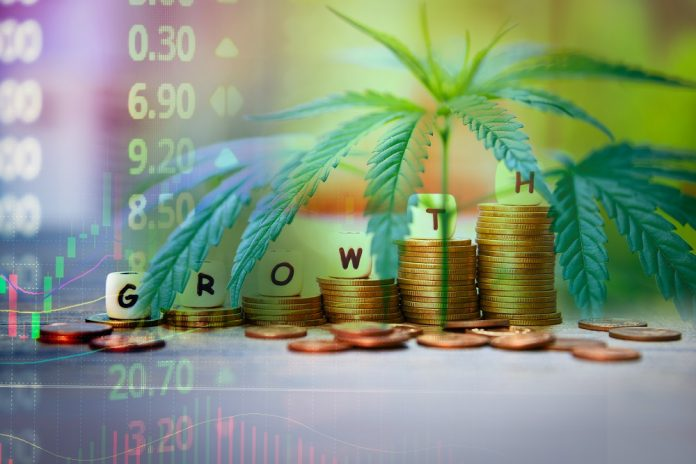 Le cannabis, placement alternatif en vogue